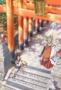 Инари, Лисицы и Волшебная любовь (Inari, Konkon, Koi Iroha)