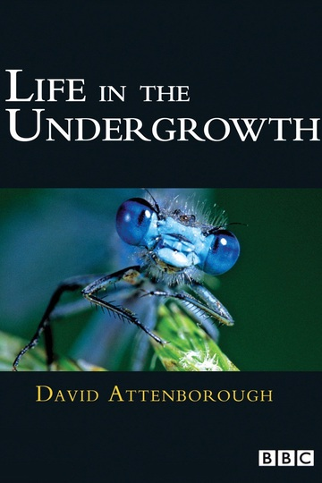 BBC: Жизнь в микромире / Life in the Undergrowth (сериал)